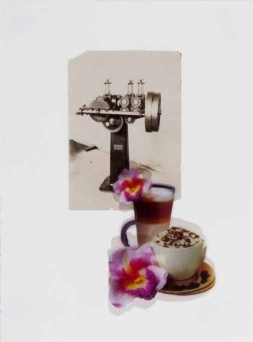 """The Eating of Flowers, 1  16 X 11X 1/4""""  acetate collage, found photograph on rag paper"""