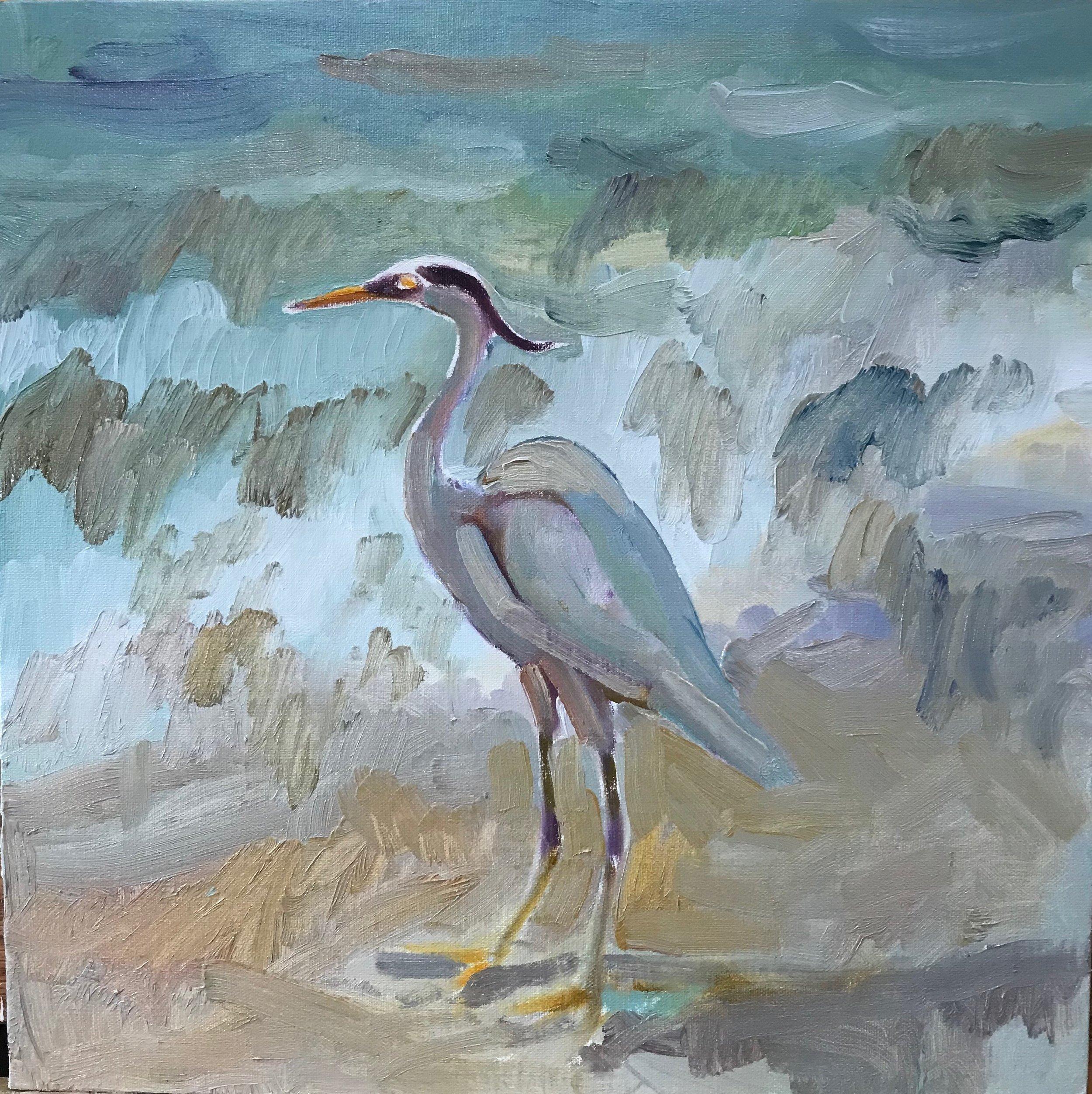 Great Blue Heron, oils, 12 x 12