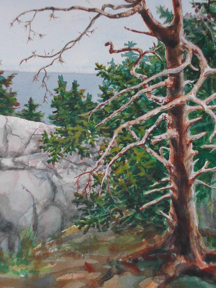 Tree Sentry, watercolor, 11 x 15