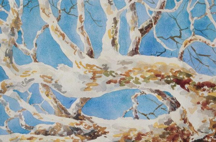 Sycamore Bones, watercolor, 9 x 12