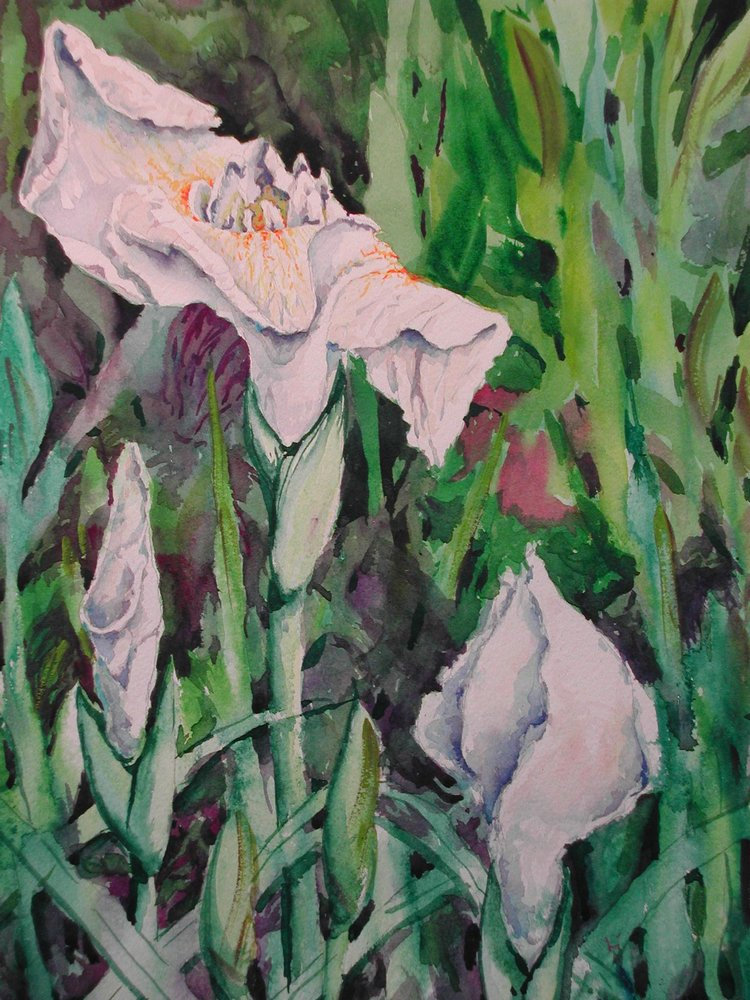 White Japanese Iris, watercolor, 16 x 20