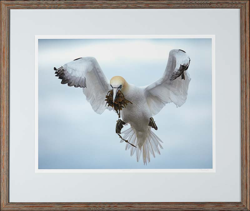 Lots of other great artists  are also carried in our Art Gallery, including some fine art limited edition photography. Click the photo to see a selection!