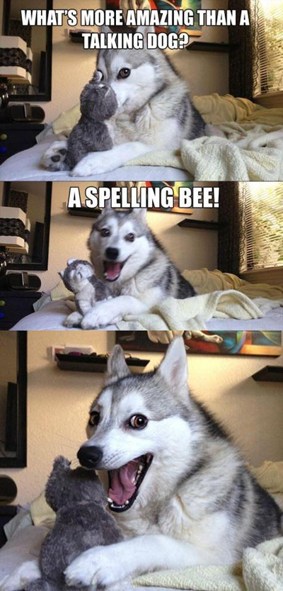 """A pun husky meme: a husky dog shyly hides its face behind a toy, asking """"What's more amazing than a talking dog?"""" In the next panel, the dog says """"A spelling bee!"""" In the third panel, the dog opens its mouth and eyes wide, as if asking for praise."""