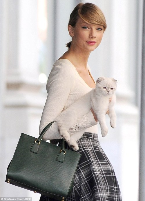 Taylor Swift carrying her cute white cat, Detective Olivia Benson