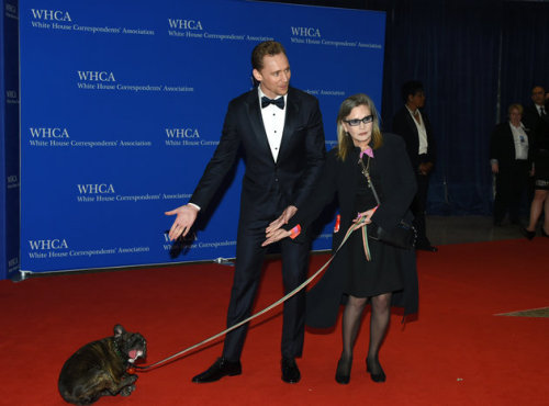 Tom Hiddleston and Carrie Fisher on the White House Correspondents' Association Dinner red carpet, gesturing towards Carrie's dopey-looking bulldog, Gary.