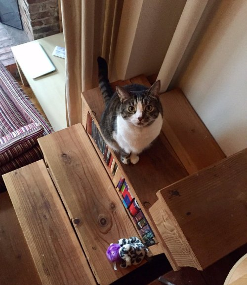 A photograph of Orlando the cat, standing on a wooden staircase, looking up at the camera.