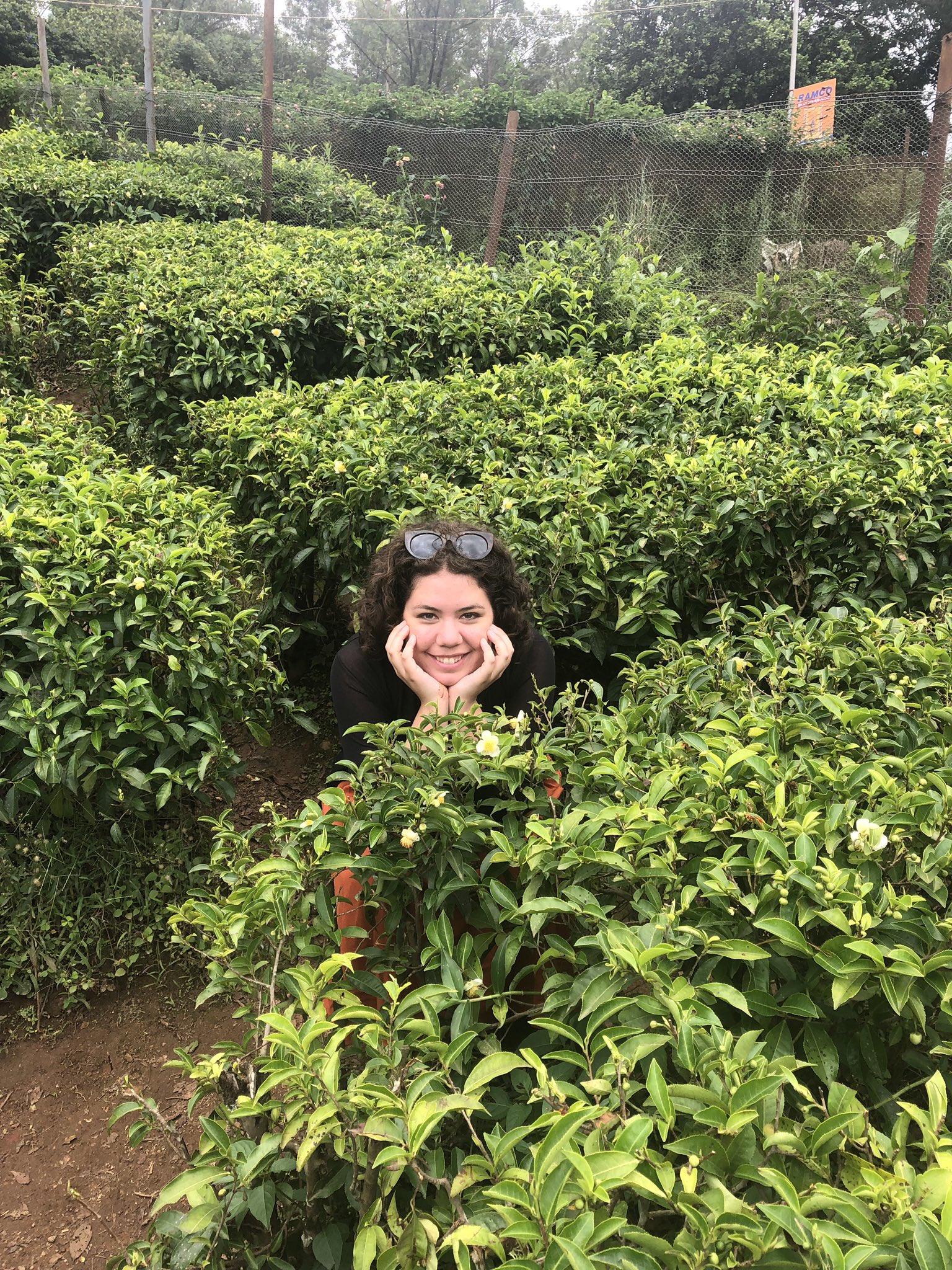 Elizabeth, smiling and surrounded by tea plants.
