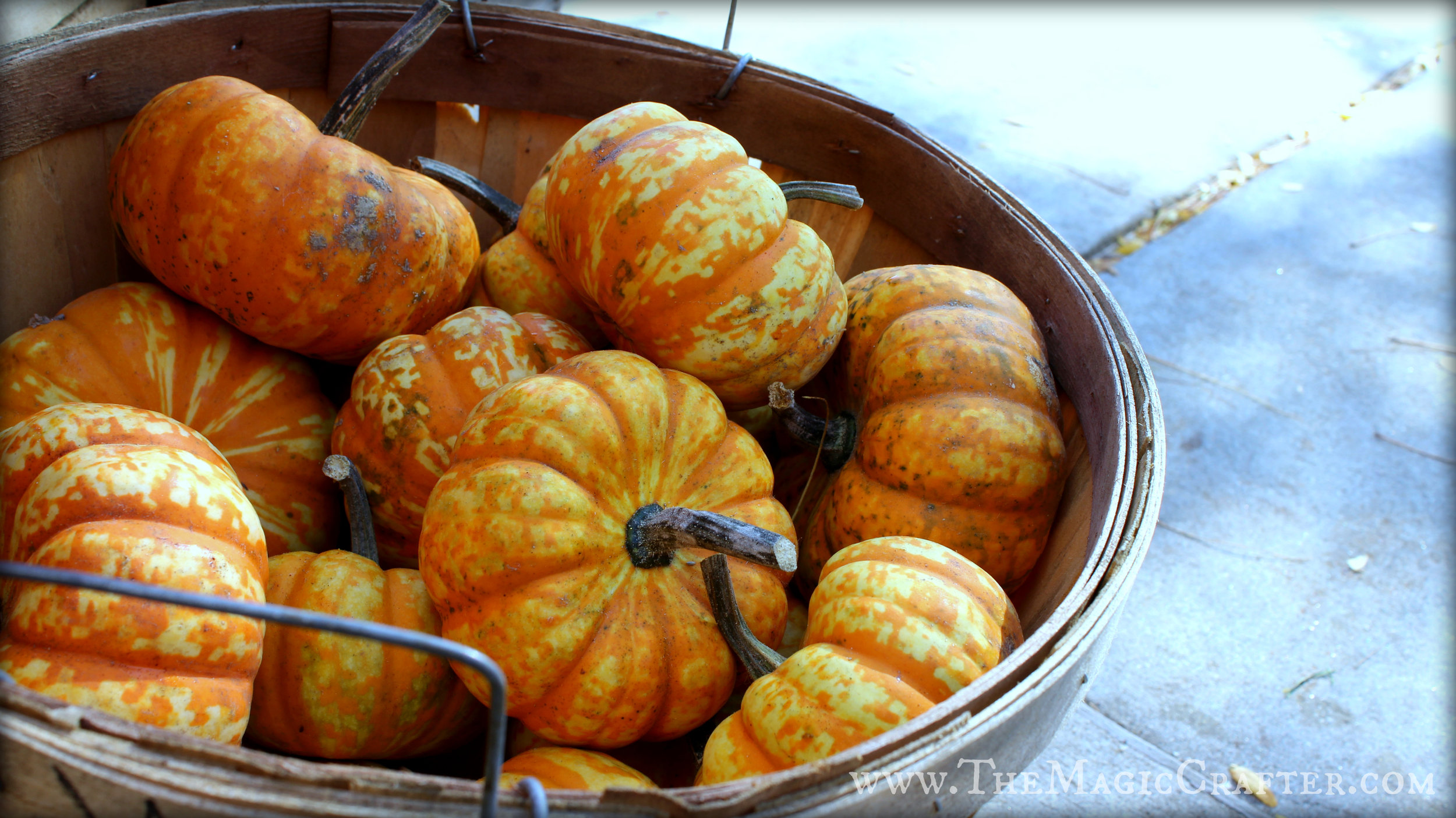 Aren't these Jack-be-Little pumpkins so precious!?! I thought they were especially cute!