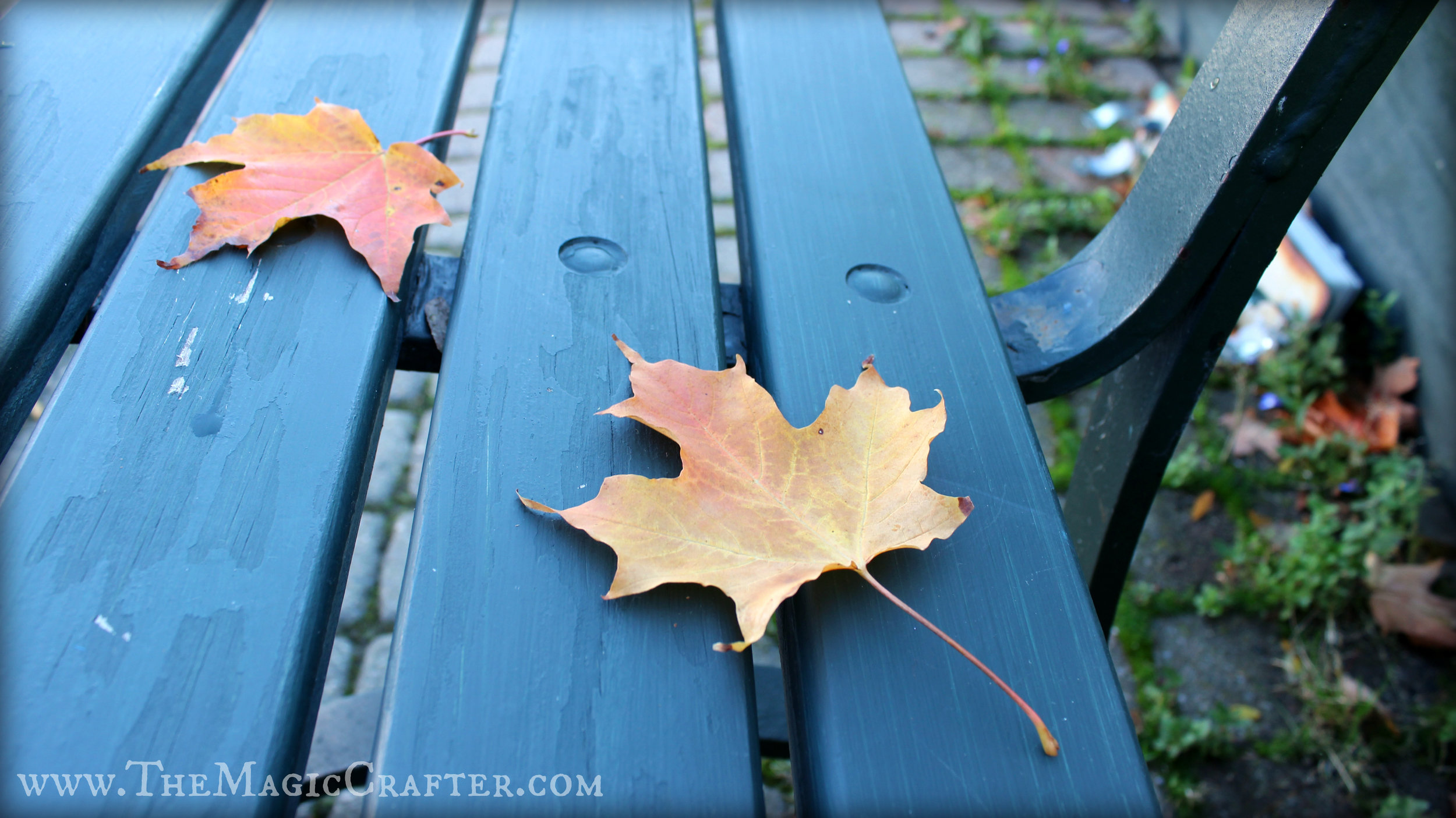 Autumn leaves lay sitting on a bench in Charlevoix, Michigan. Fall is upon us, and the colors this year are simply stunning!