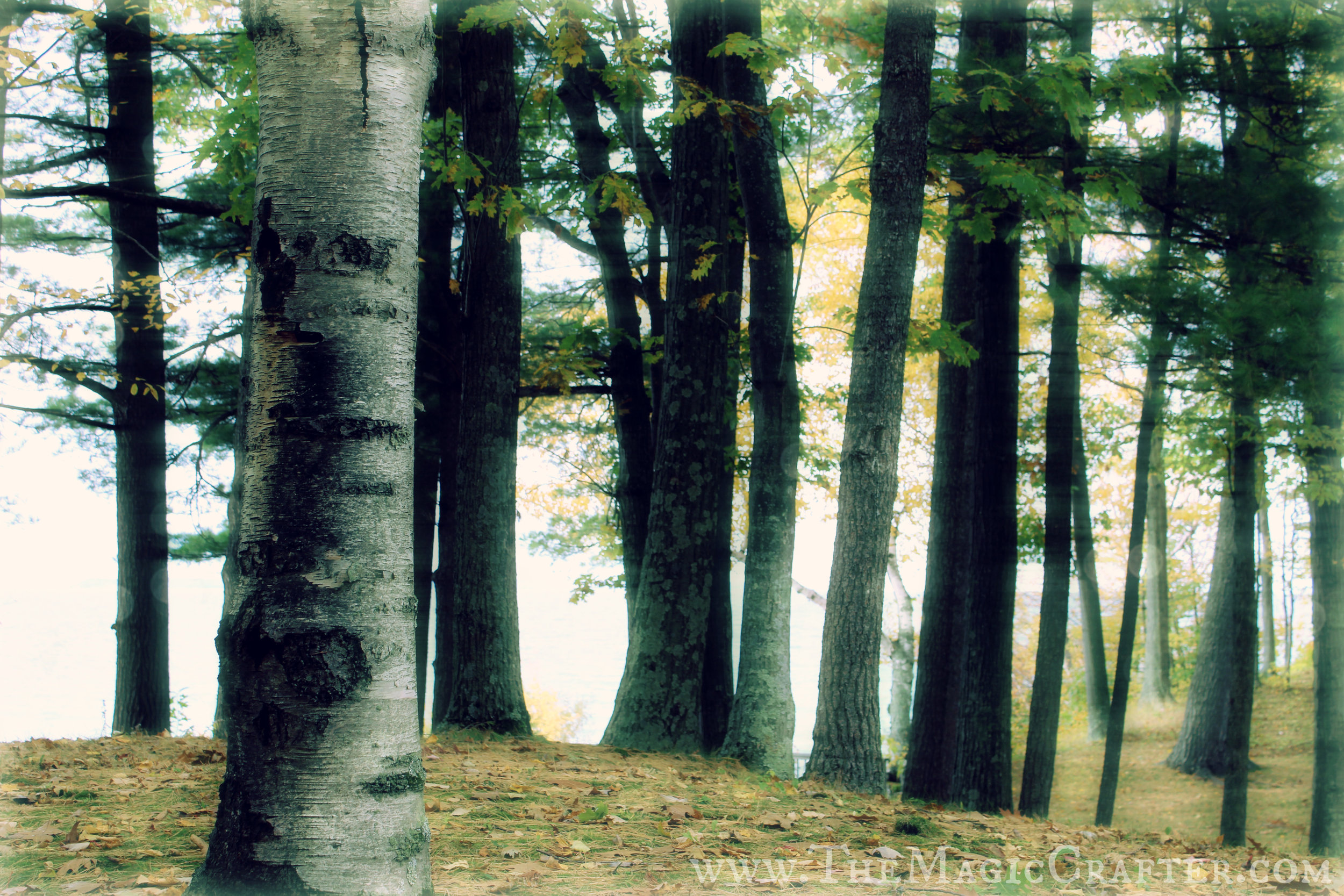 Fairytale-forest-enchanted-woods-edit-for-get-outside