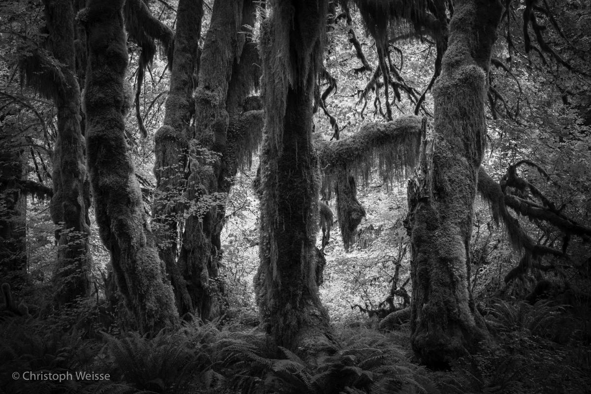 USA-Oregon-Washington-Landscape Photography_© Christoph Weisse 2017-6.jpg