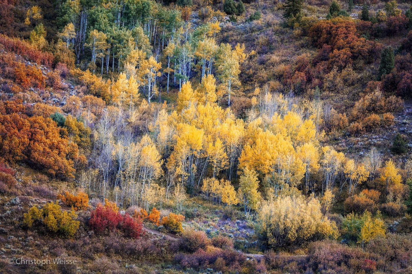 © ChristophWeisse-www.profi-foto.ch-Colorado Herbst-3.jpg