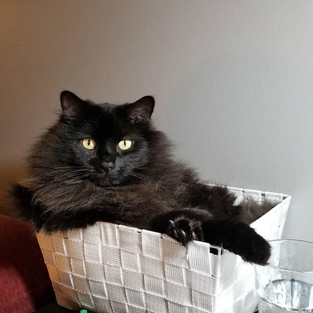 Cat in a box. . . . #catinabox #blackkitty #blackcatsofinstagram #vader #vadercat #cat #meow #cats #catsofinstagram