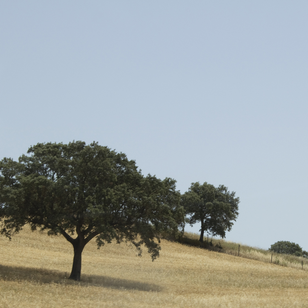 Trees in the plains of Alentejo Southern Portugal