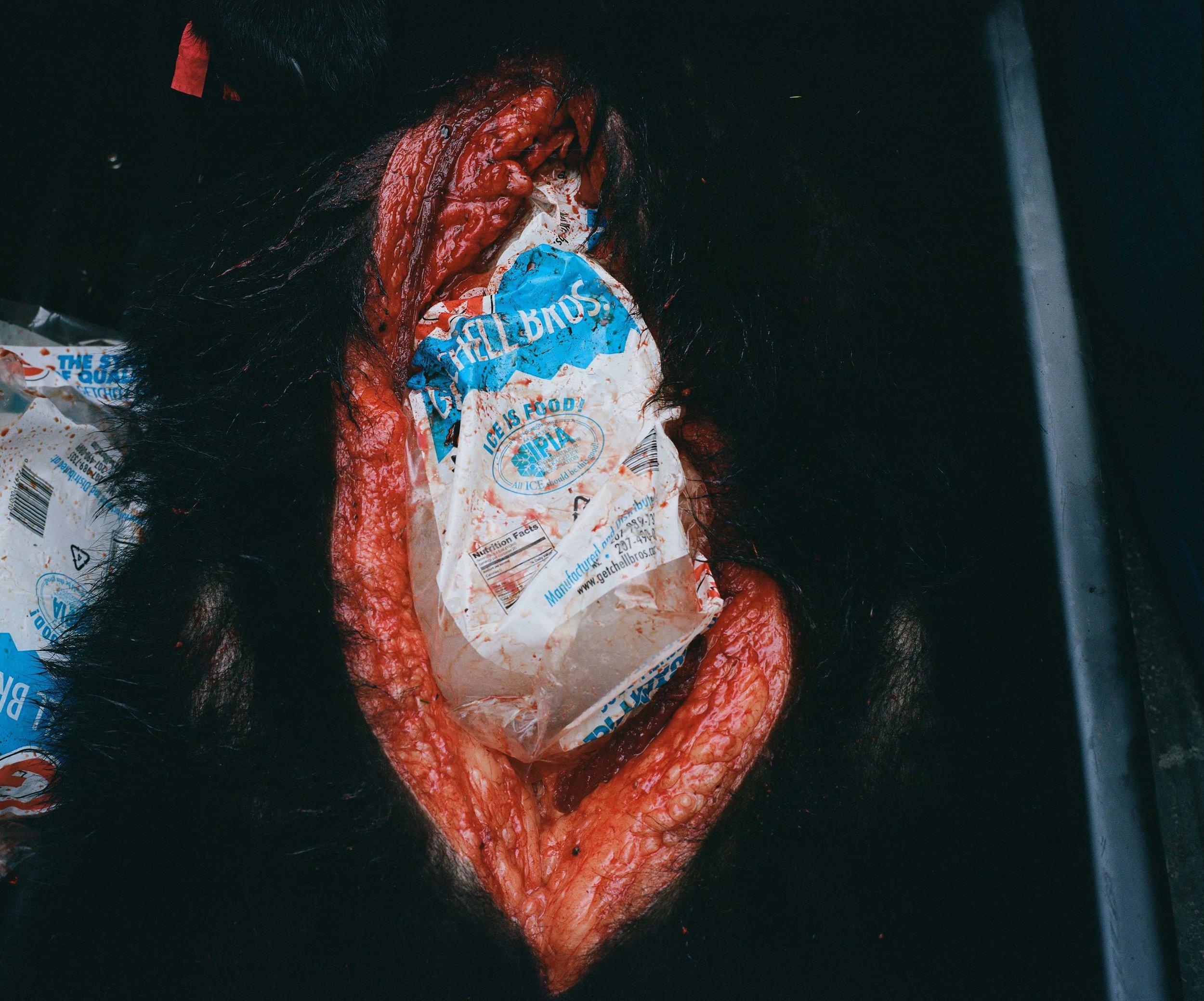 icewoundweb.jpg