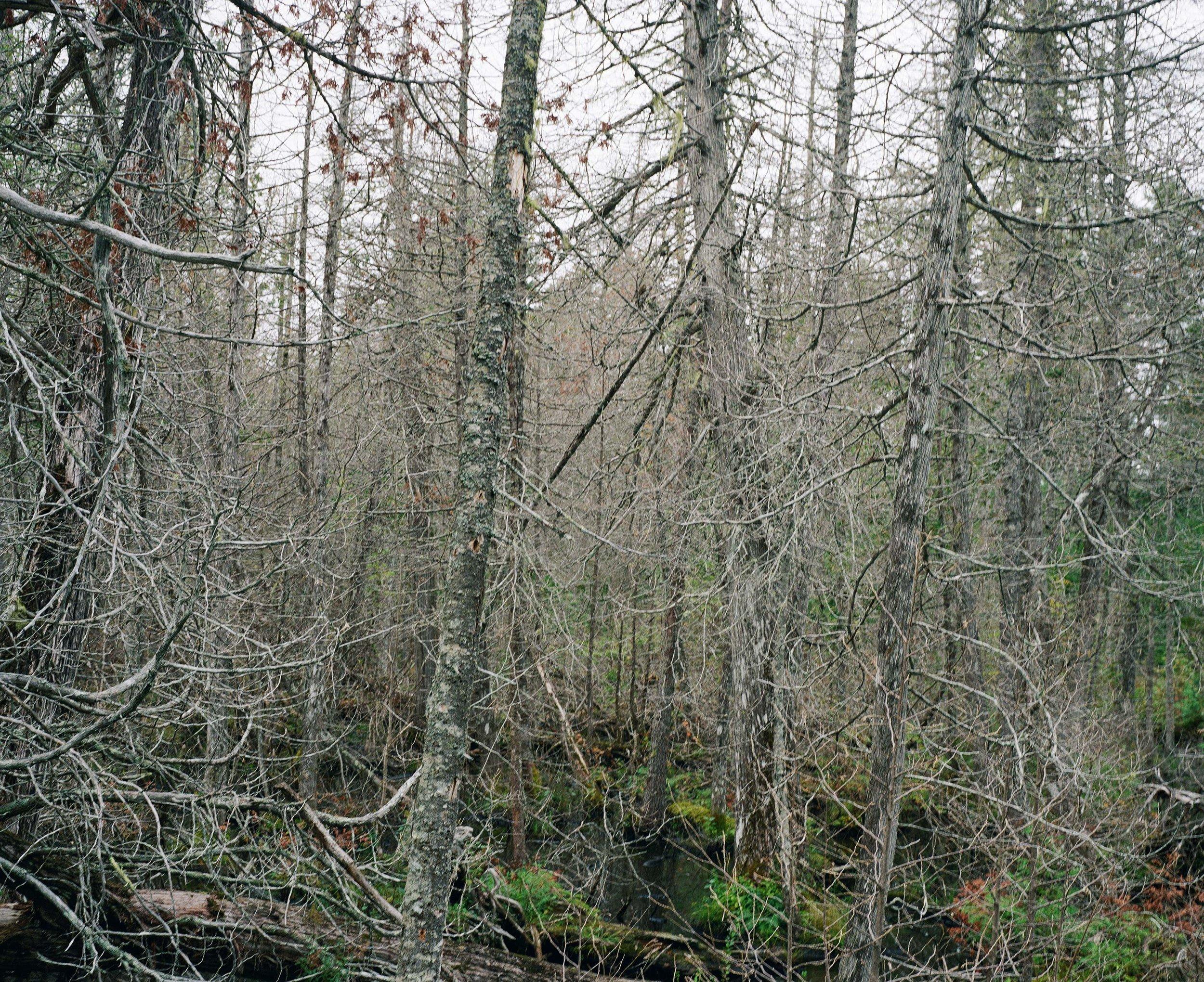 tangletreesweb.jpg