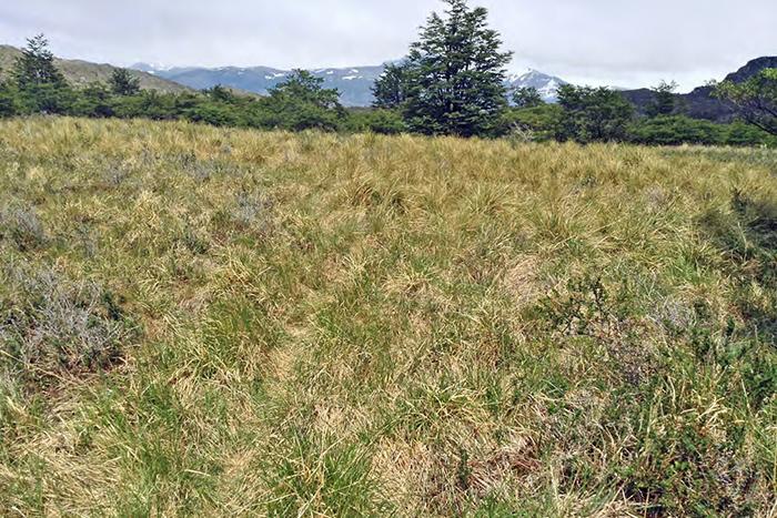 CVIP-grass-ATCF-700x467px.jpg