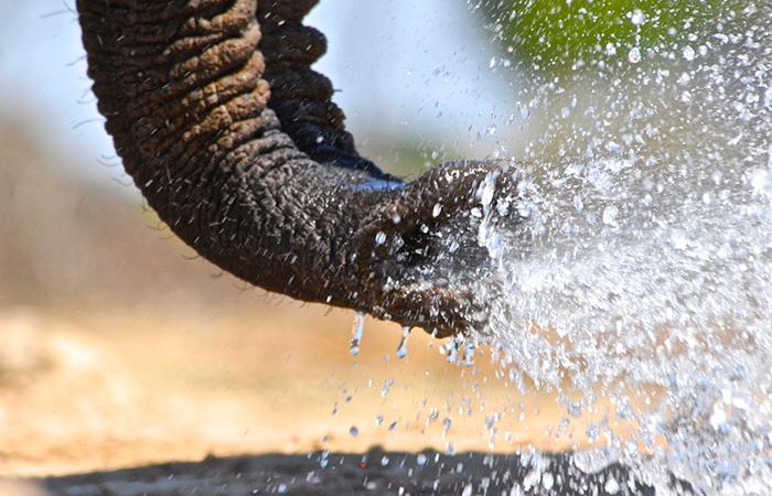 ATCF-water-for-Hwnage-elephant-trunk-700x450px.jpg