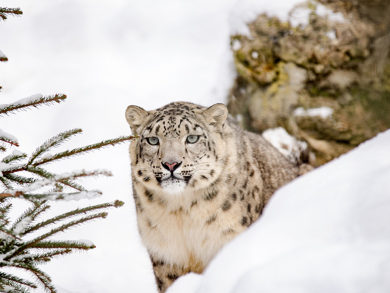 Snow Leopard Conservancy India Trust - Grant Amount: $20,000Project: Promotion of innovative grassroots measures that encourage local people to become better stewards of the endangered snow leopards, their prey and habitats.