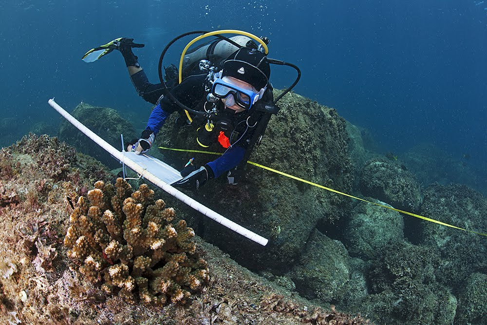 Coral Reef Monitoring in the Gulf of California.jpg