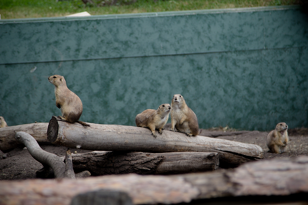 Red_River_Zoo_1000_0014.jpg