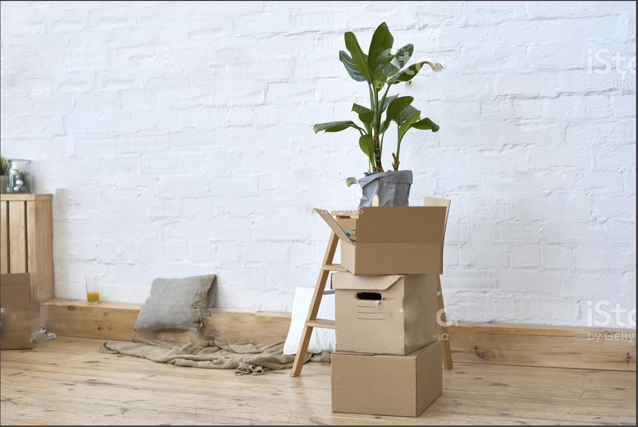 plant boxes.jpg