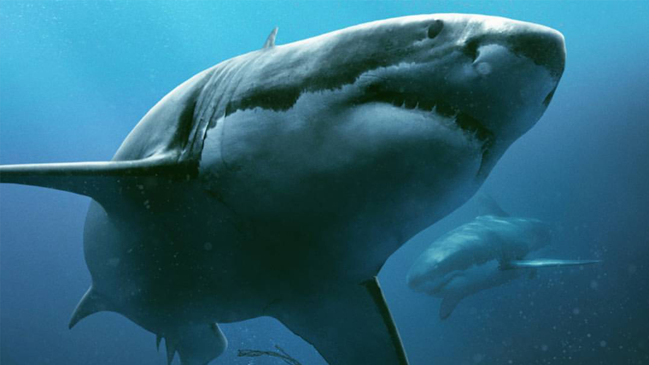 47 Meters Down - Outpost VFX for Tea Shop & Film Company