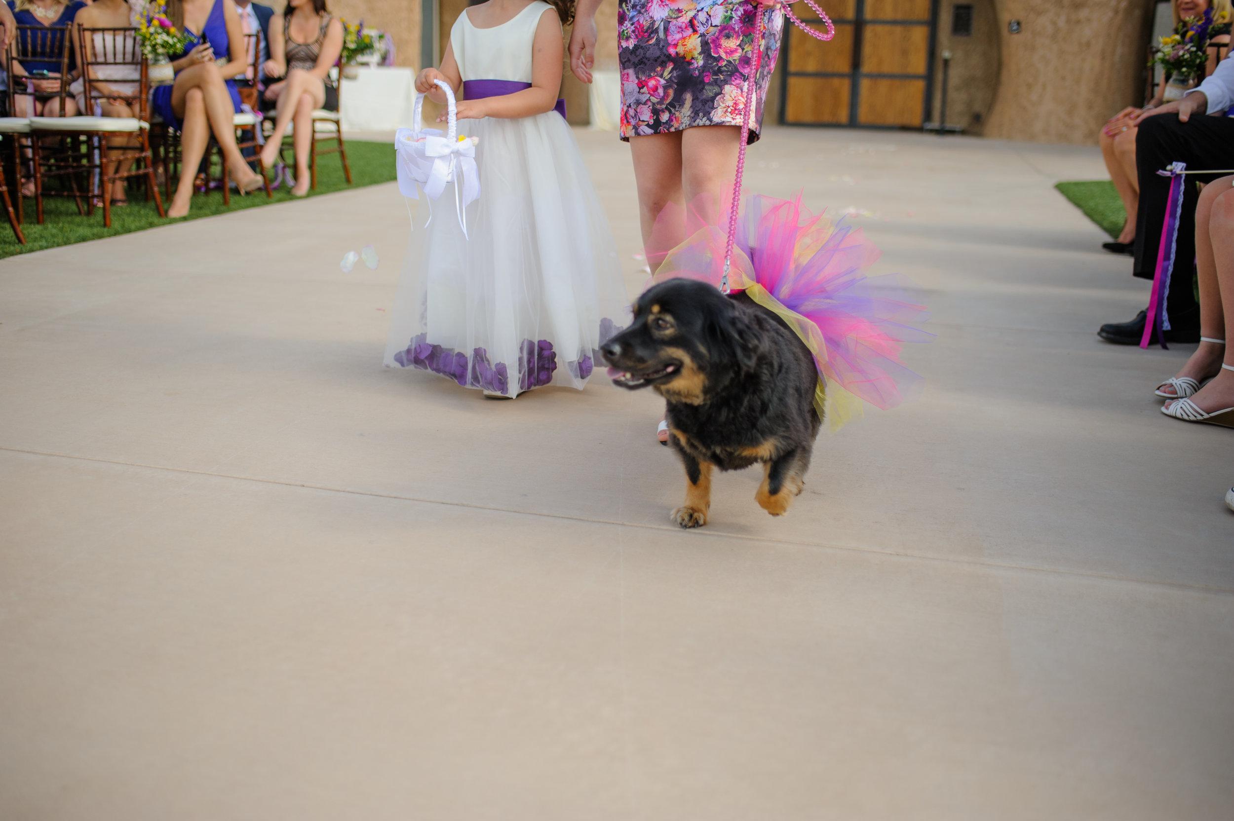 casey-sasha-009-helwig-winery-plymouth-wedding-photographer-katherine-nicole-photography.JPG