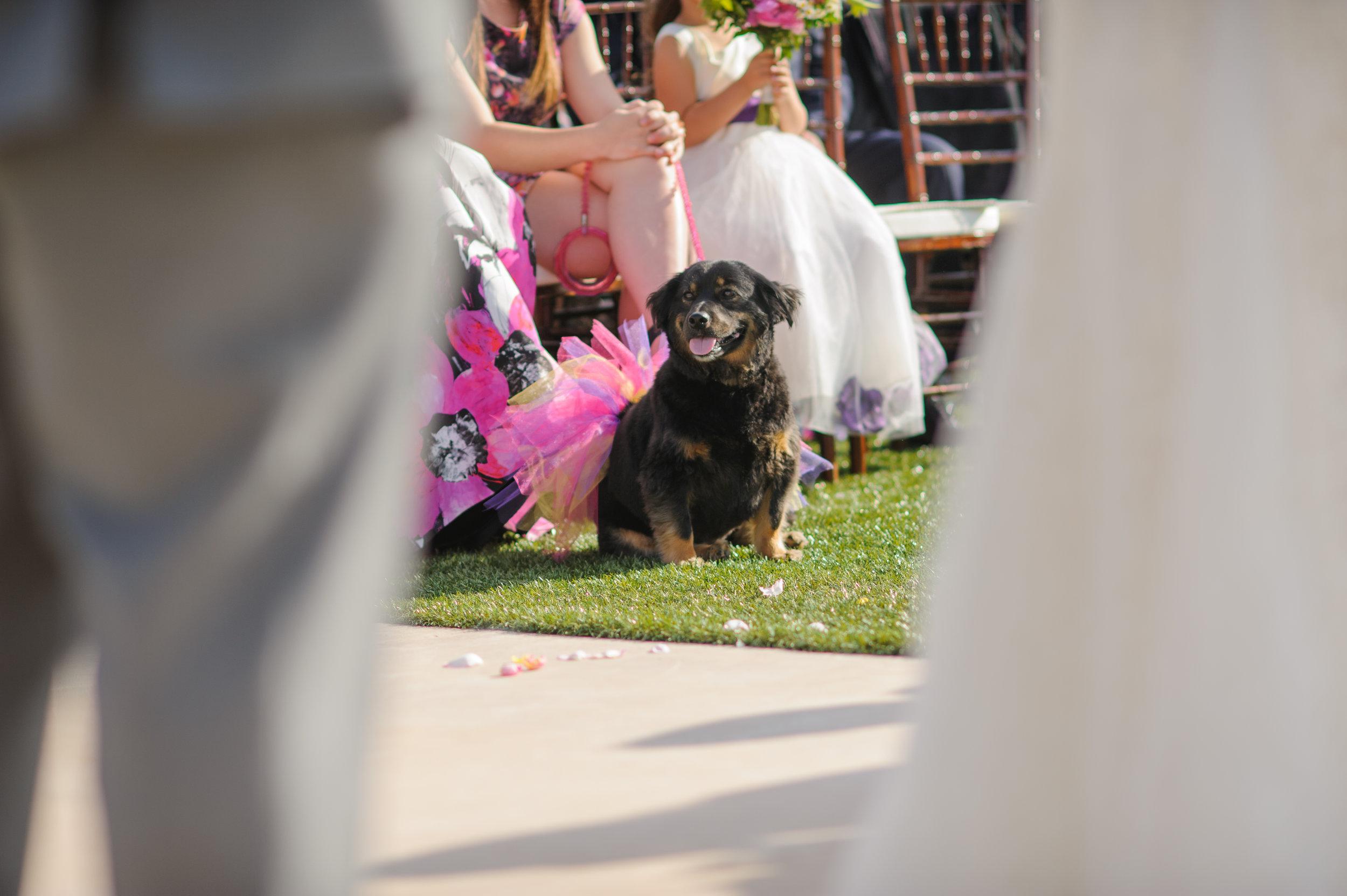 casey-sasha-014-helwig-winery-plymouth-wedding-photographer-katherine-nicole-photography.JPG