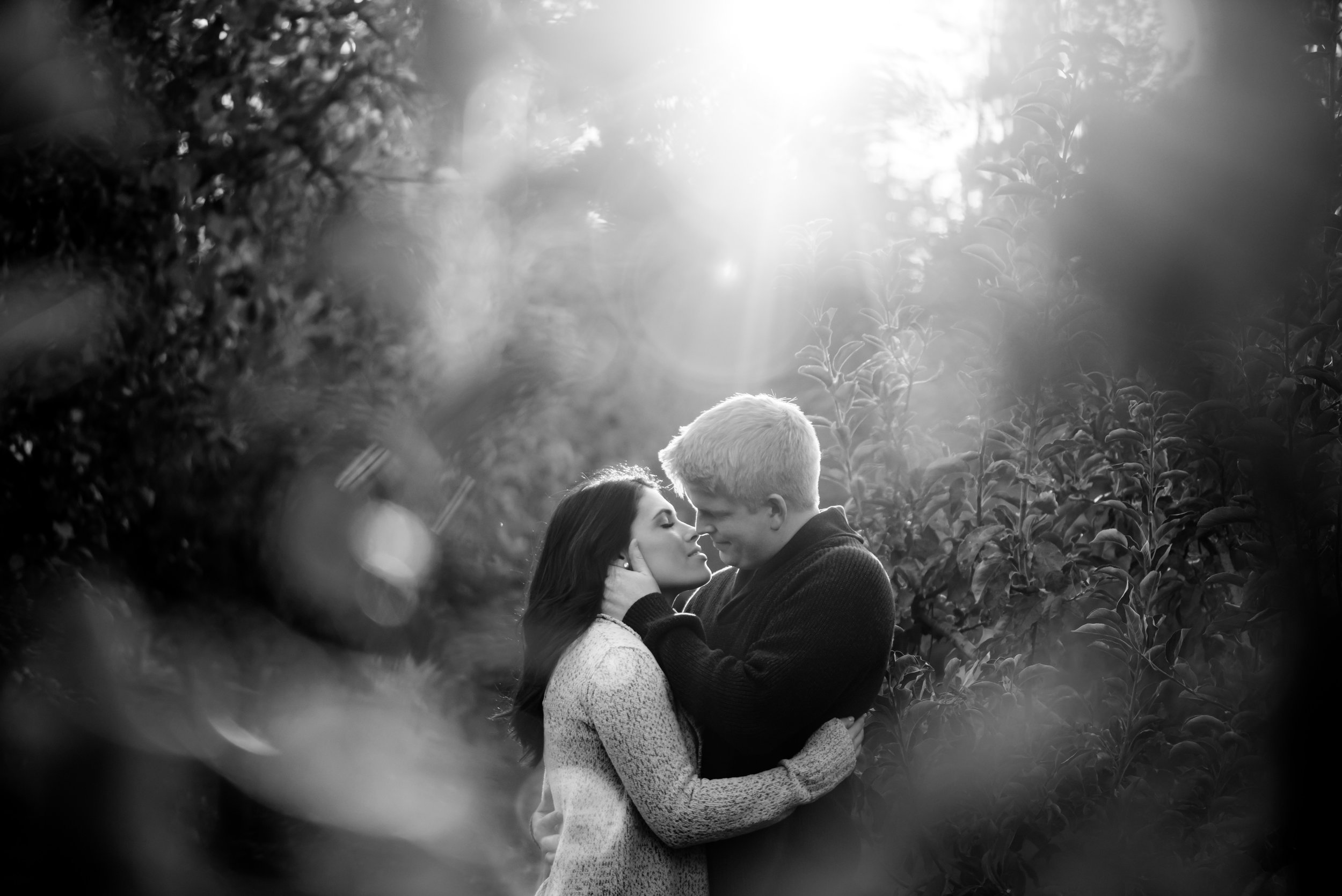 samantha-joel-015-apple-hill-engagement-photos-wedding-photographer-katherine-nicole-photography.JPG