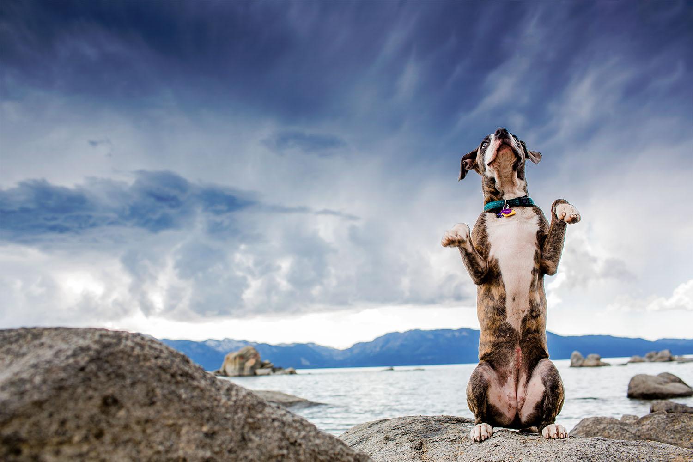 lake-tahoe-reno-dog-canine-photographer-photography-session-portrait-pets-portraits-pose-rocks