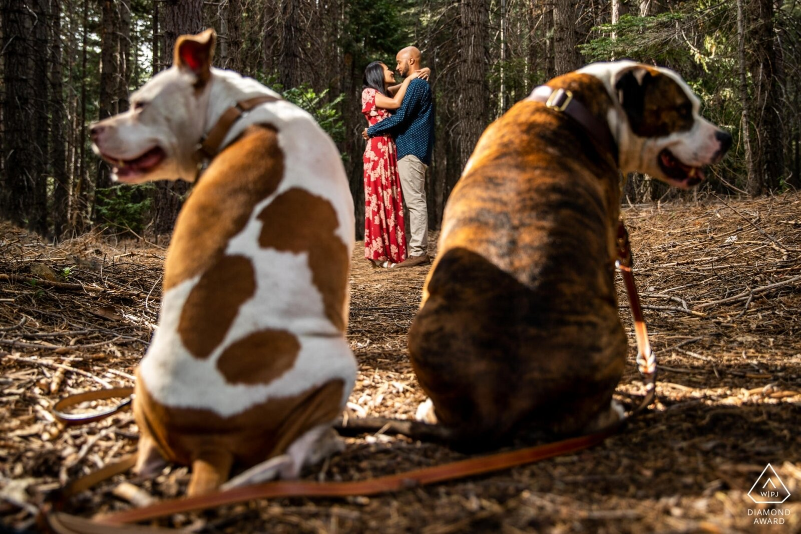 lake-tahoe-photographer-photography-engagement-wedding-pets-family