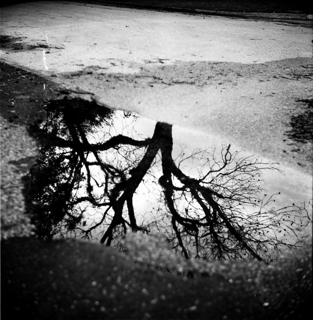 Tree in Puddle, Central Park