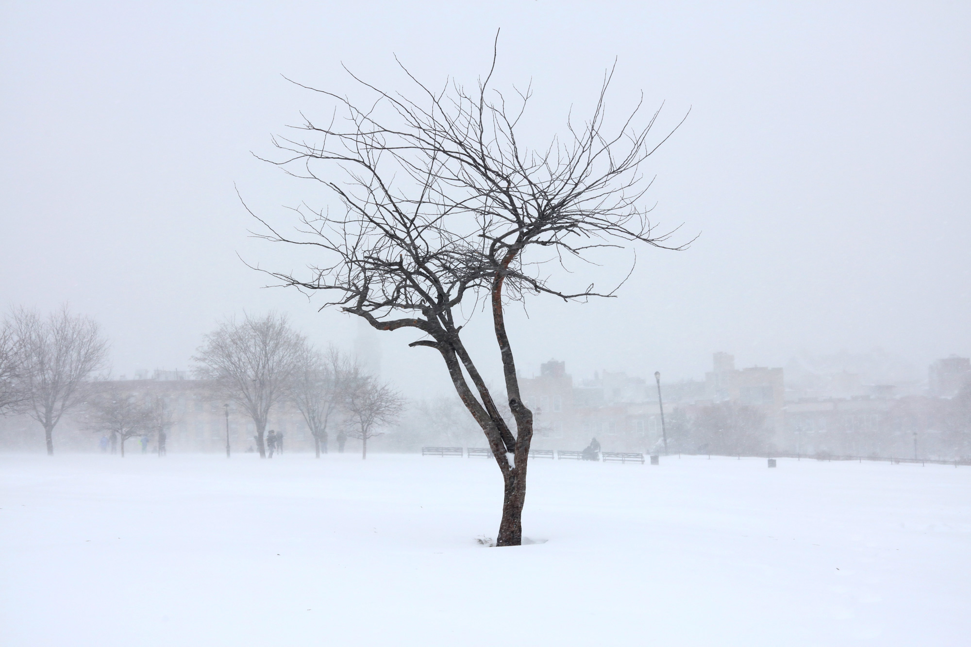 Brooklyn Winter, Sunset Park