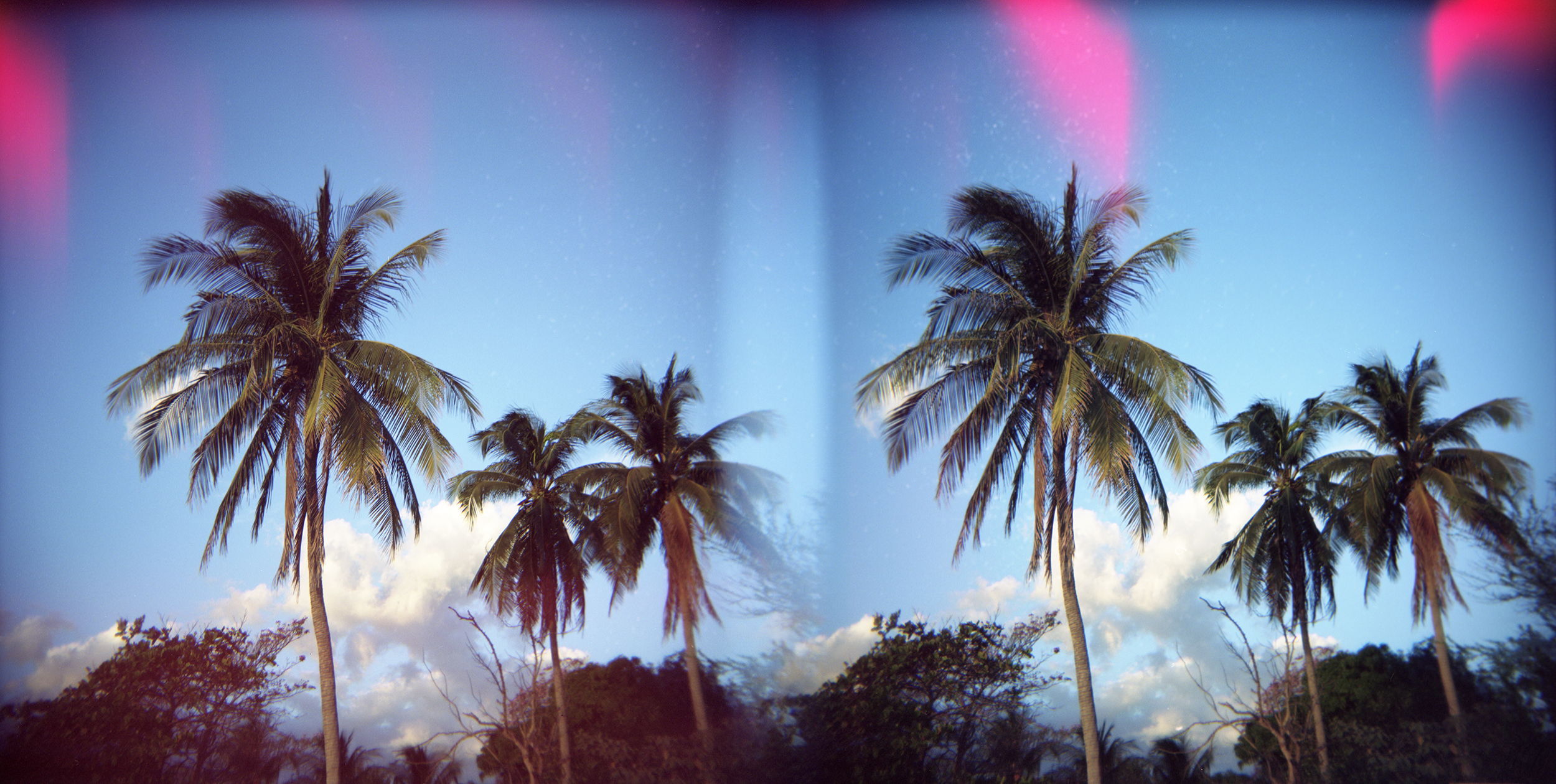Palms, Panoramic