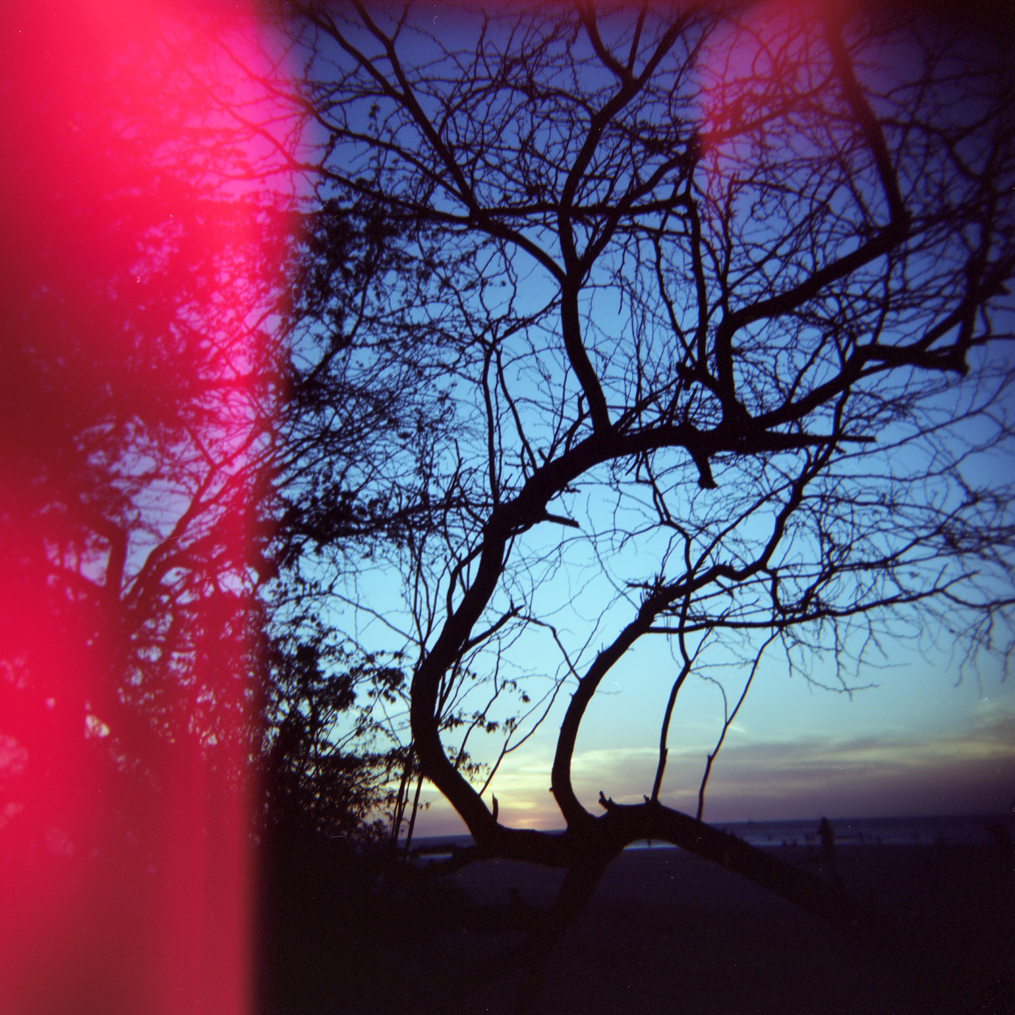 Sunset & Light Leak