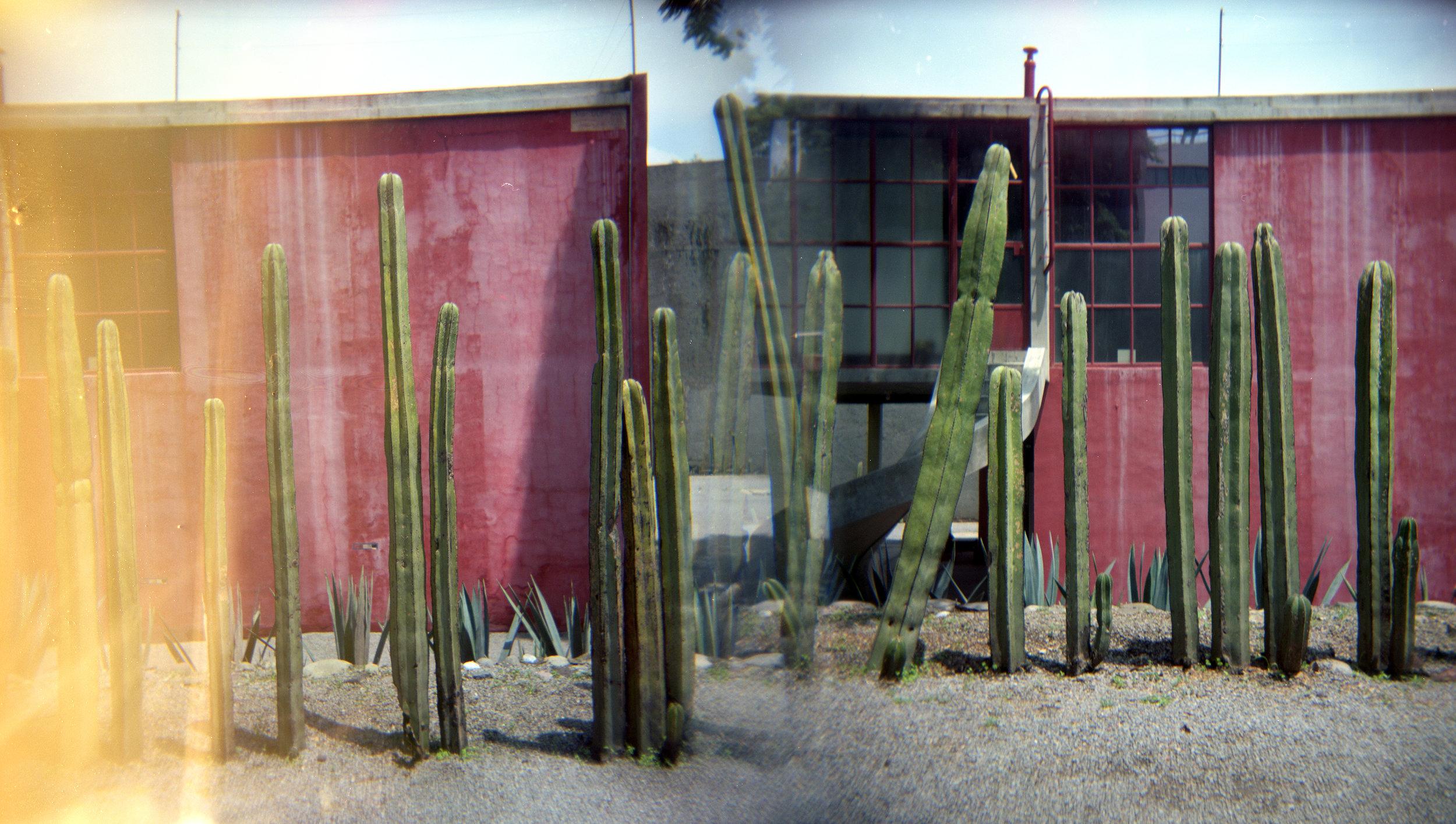 Diego Rivera Studio Cactus Garden