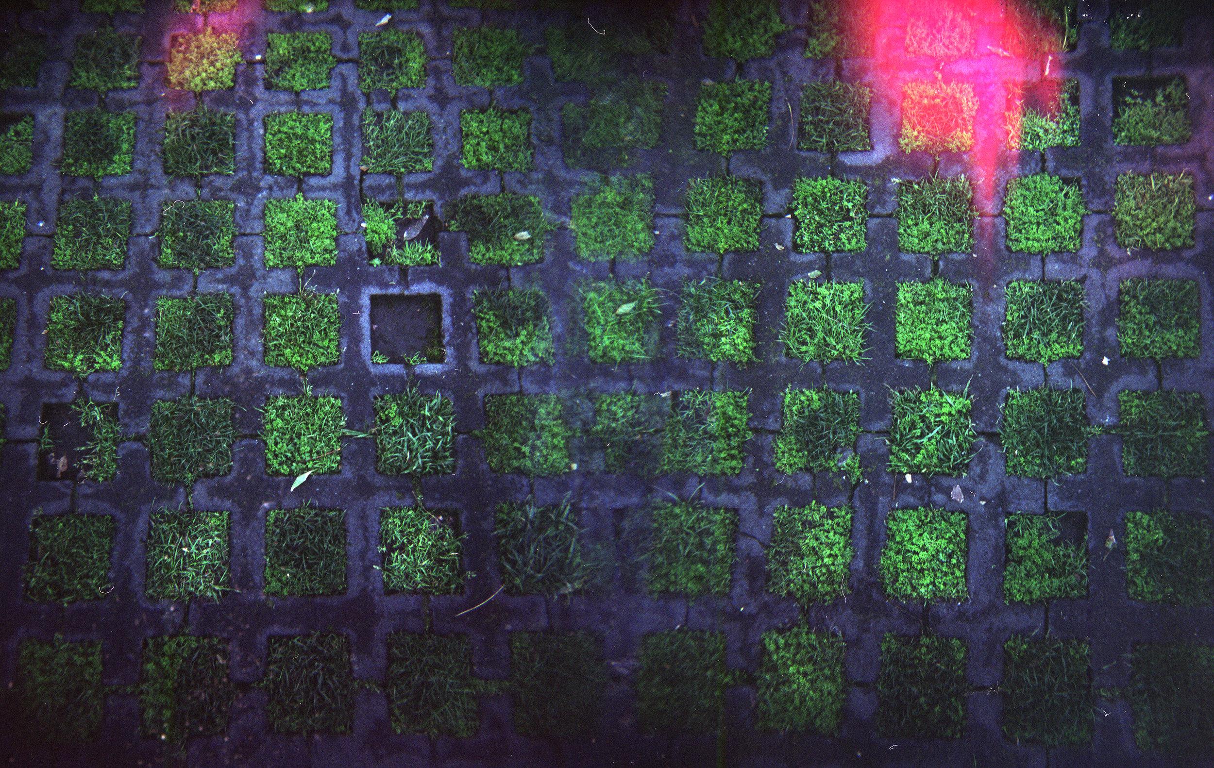 Grass Tiles, Polanco