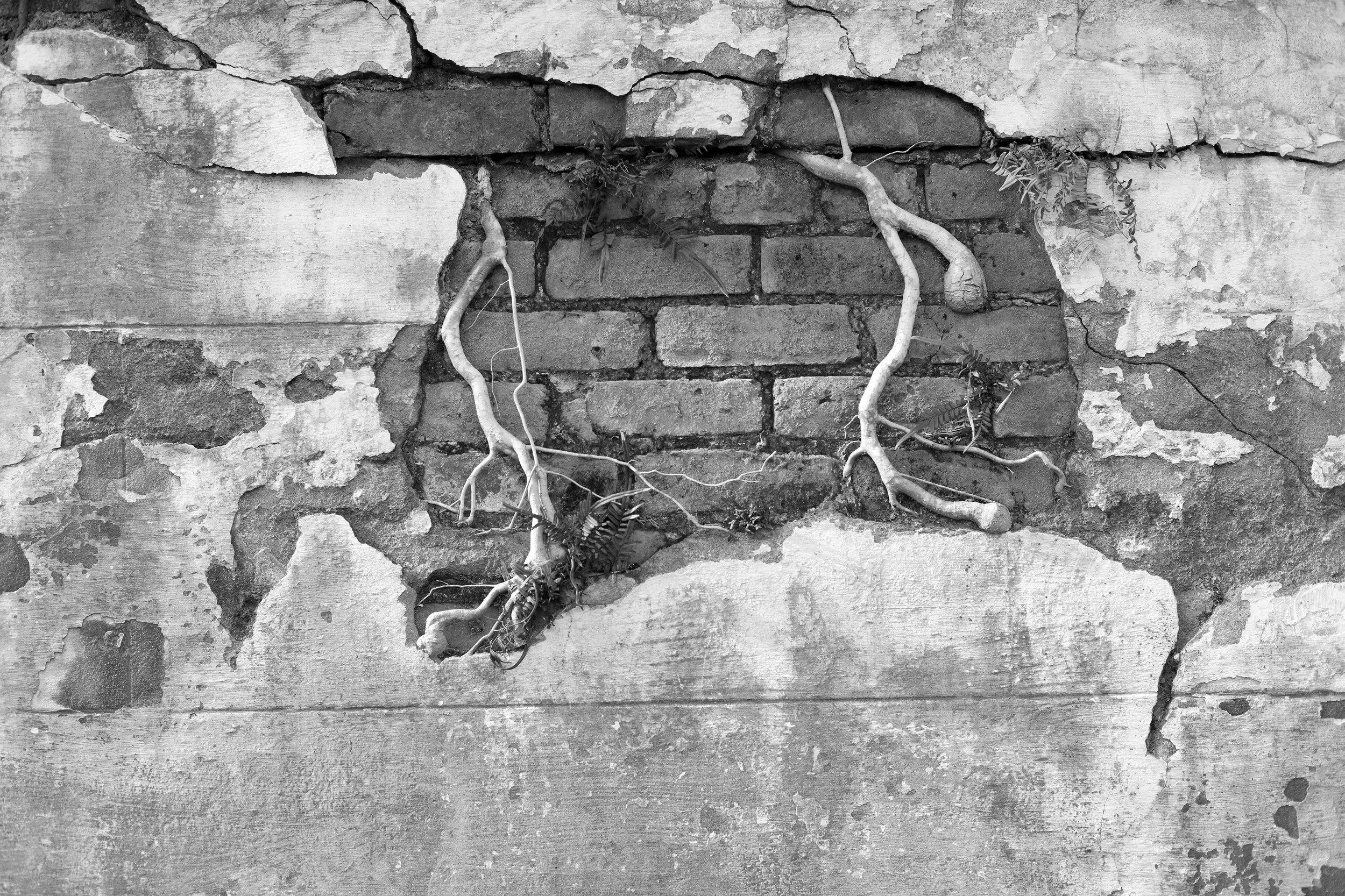 Roots Through Bricks