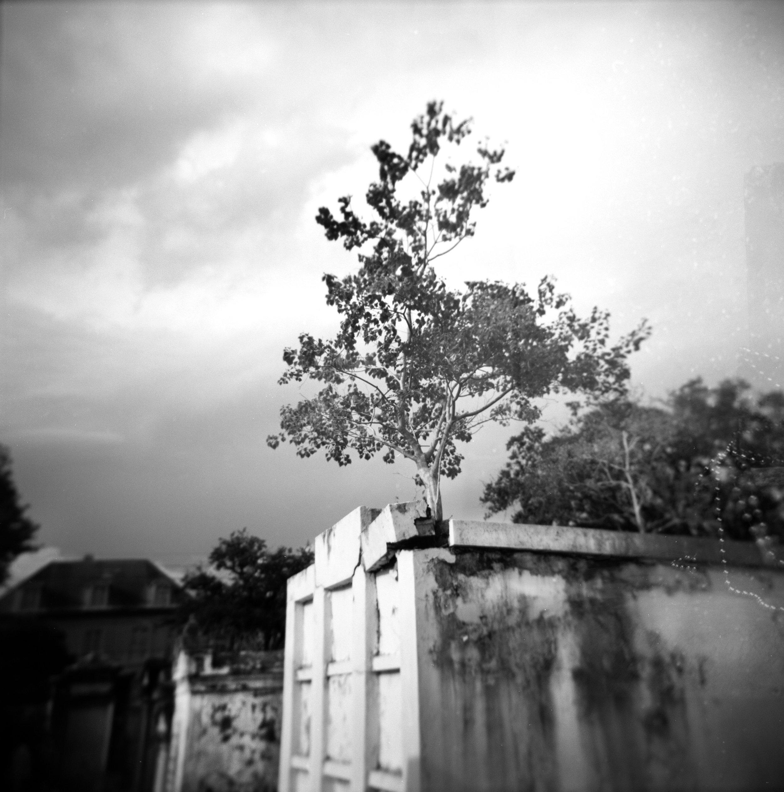 Tree Reaching