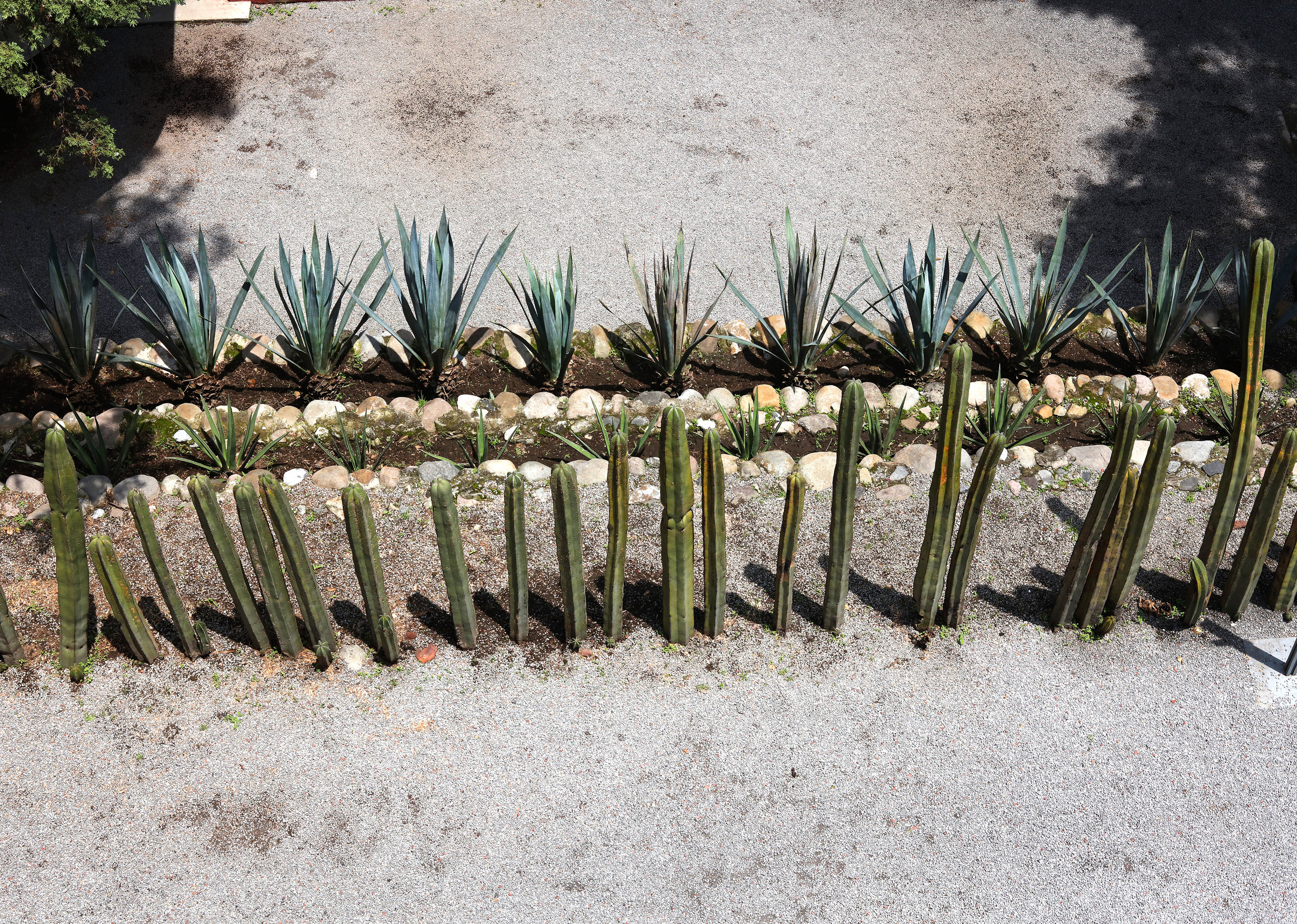 Garden Rows, Diego Rivera Studio