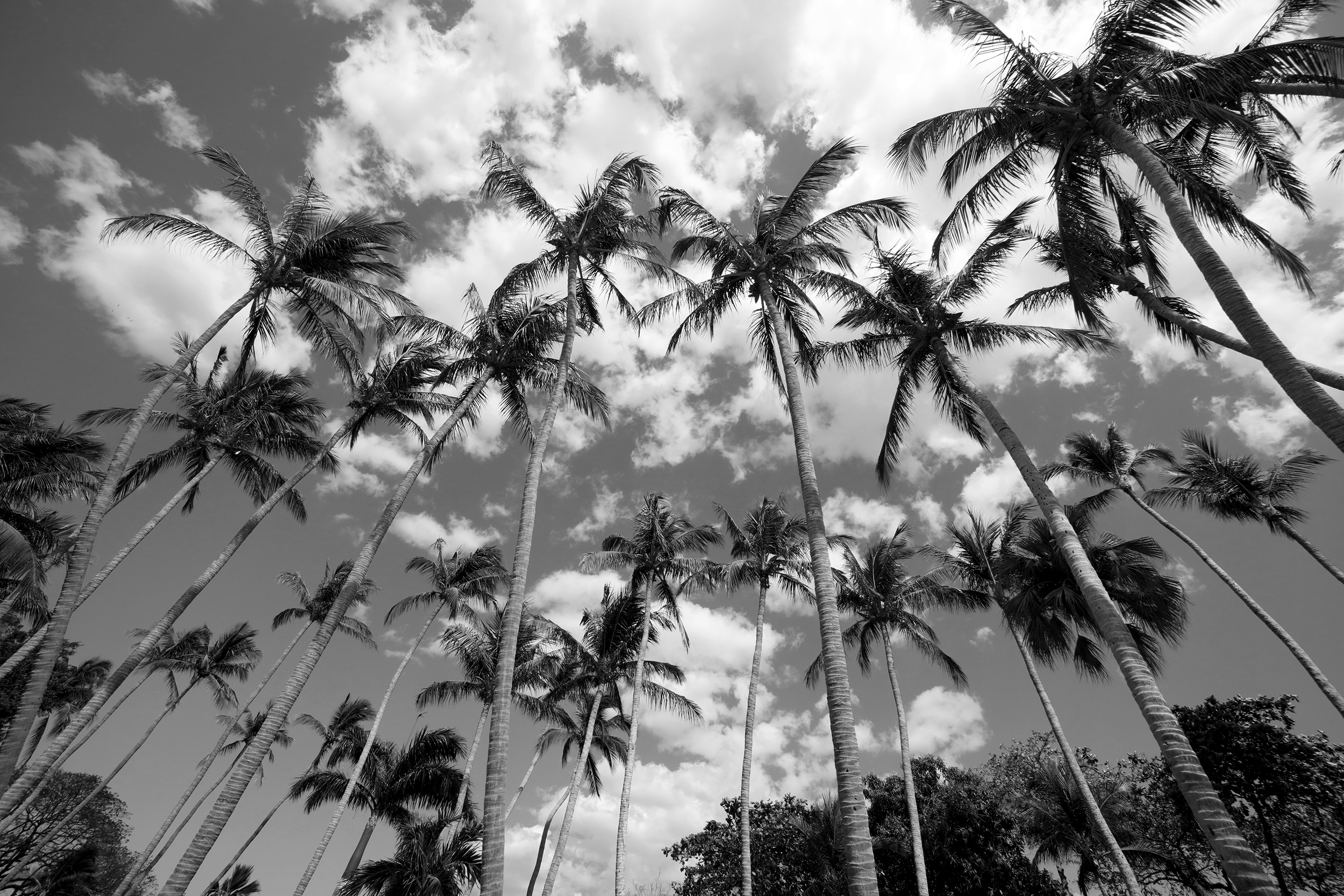 Palms, Black & White