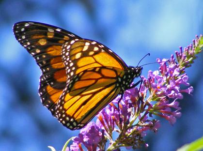 butterflypark.jpg