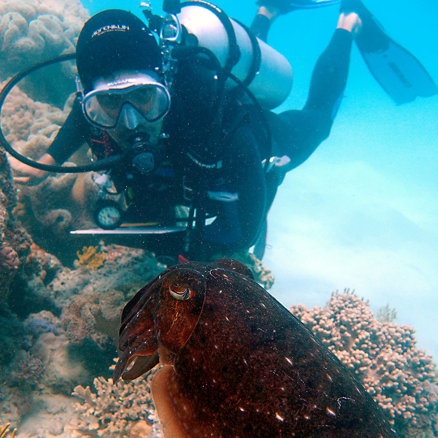 Lab member Rob Streit watching a cuttlefish.