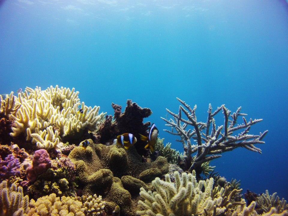 Coral Reefs Anemone.jpg