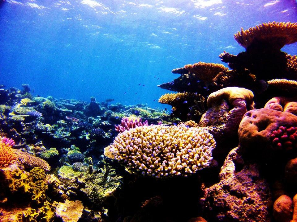 Reef 2.jpg