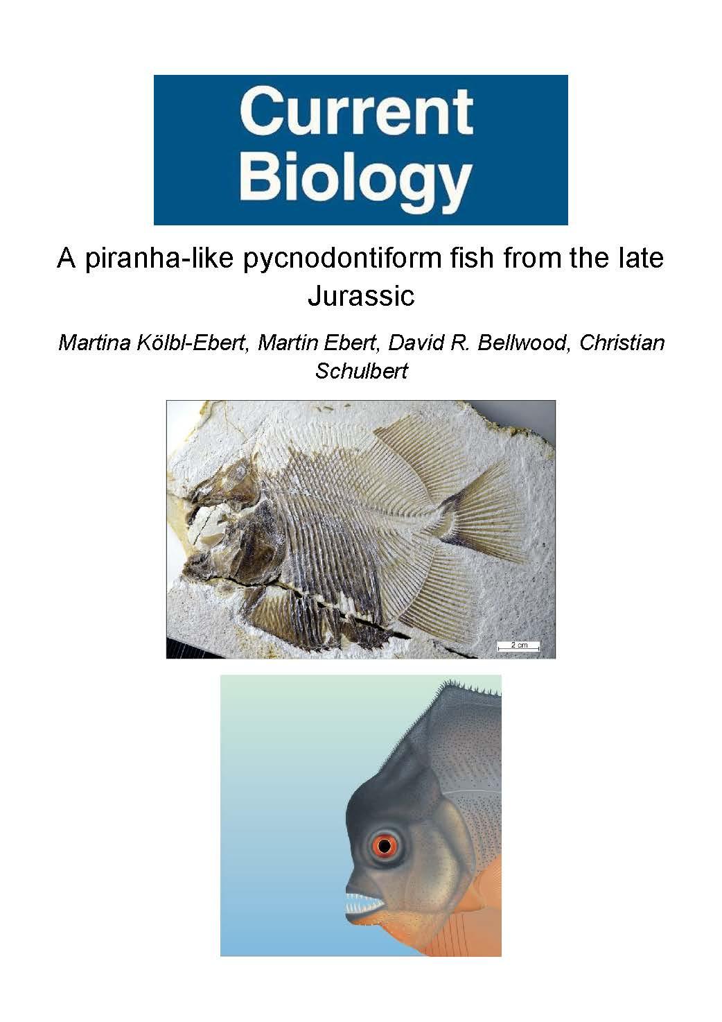 Kolbl-Ebert et al. 2018 (Current Biology).jpg