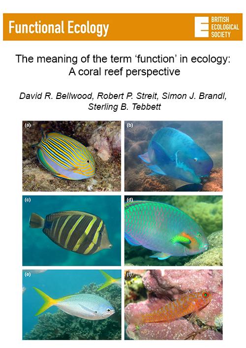 Bellwood_et_al_2019-functional_ecology.png