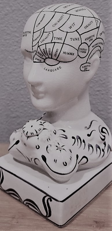 phrenology skull crop.jpg