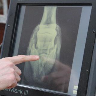 Digital røntgen   Med et moderne transportabelt digitalt røntgenapparat kan vi tage billeder af meget høj kvalitet i stalden, og se billedet med det samme.